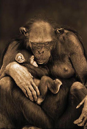Apes Motherhood Poster