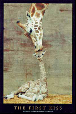 Giraffe The First Kiss Poster