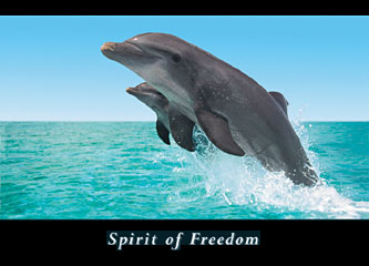 Spirit of Freedom Poster