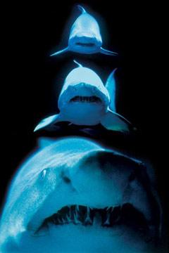 Shark-Attack-Poster