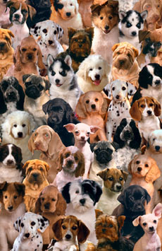 Lovable-Puppies-Poster