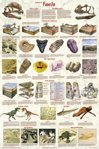 Introduction to Fossils Poster