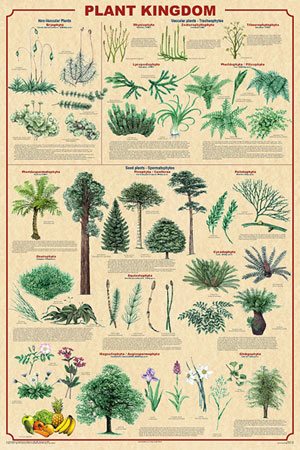 Plant-Kingdom-Poster