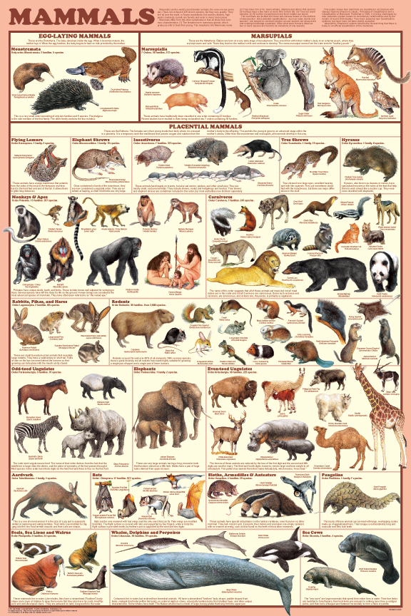 Mammals Educational Poster