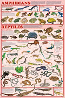 Amphibians and Reptiles Poster