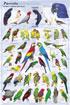 Parrots-Poster