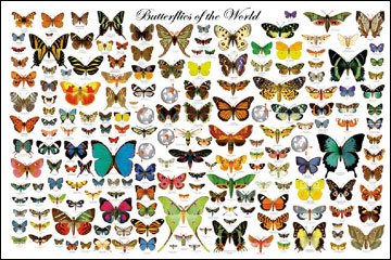 Butterflies-of-the-World-Poster