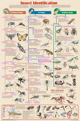 Insect-Identification-Poster
