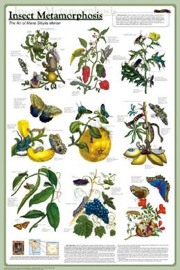 Insect-Metamorphosis-Poster