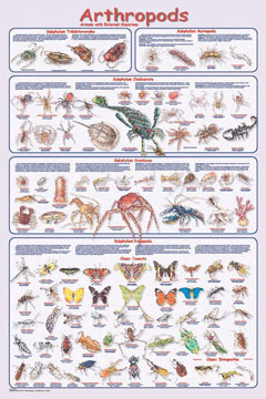 Arthropods-Poster