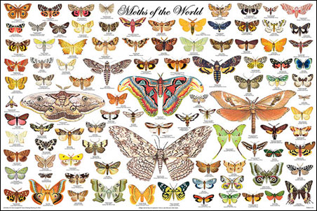 Moths-of-the-World-Poster