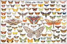 Moths of the World Poster