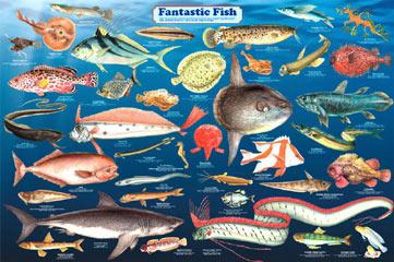 Fantastic-Fish-Poster