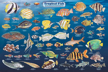Tropical-Fish-Poster