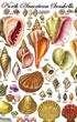 North-American-Seashells-Poster