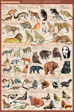 Carnivora Educational Poster