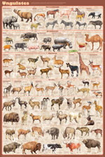 Ungulates Educational Poster