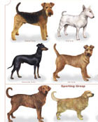 Dogs of the World Poster