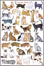 Cats of the World Poster