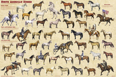 North-American-Horses-Poster