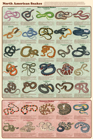 North-American-Snakes-Poster