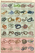 North American Snakes Poster
