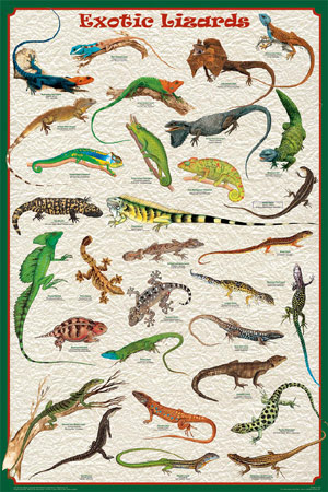 Exotic-Lizards-Poster