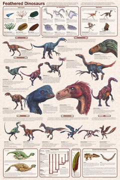 Feathered-Dinosaurs-Poster