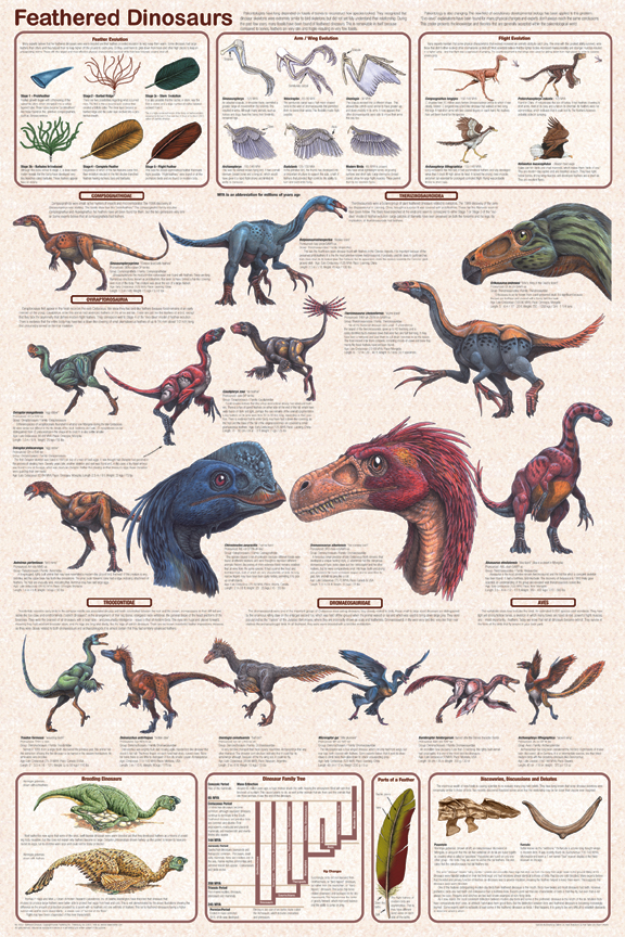 Feathered Dinosaurs Poster