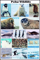 Polar Wildlife Poster