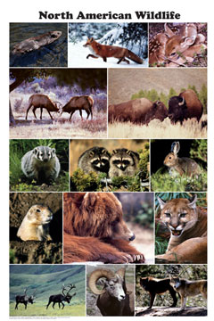 North-American-Wildlife-Poster