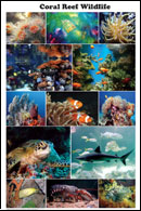 Coral Reef Wildlife Poster