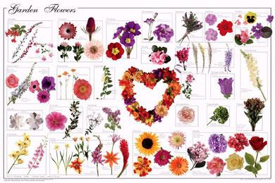 Garden-Flowers-Poster