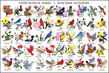 State-Birds-and-Flowers-Poster