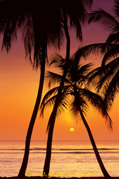 Sunset Palms Poster
