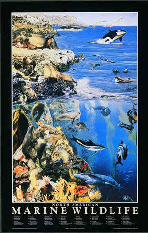 North American Marine Wildlife Poster