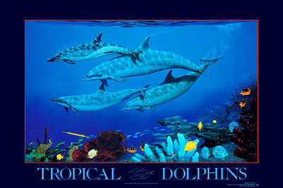 Tropical Dolphins Click Add to Cart to Order