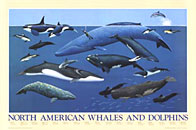 North American Whales and Dolphins Click to zoom in