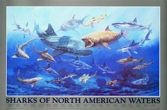 Sharks of North American Waters Click Add to Cart to Order