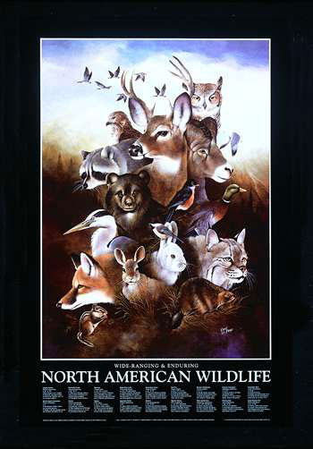 North American Wildlife poster